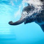 Een kleuter appt naar een olifant in het zwembad, mag dat?
